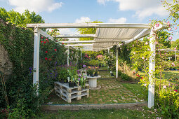 Pergola against garden wall and various roses