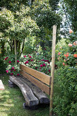 Rustic wooden bench in front of shrub roses in garden