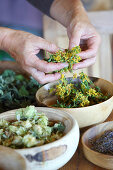 Dried St. John's wort falling through woman's hands into bowl