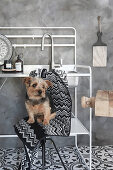 Small dog sitting on stool in front of sink on metal stand in in black-and-white kitche