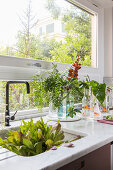 Lettuce in sink below window and branches and goldfish in vases