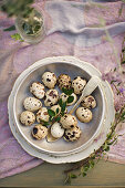 Quail eggs and silver spoon in dish on lilac tablecloth