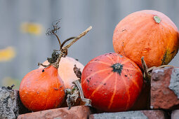 Pumpkins On Bricks