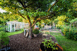 Garden With Apple Tree, Greenhouse And Raised Beds