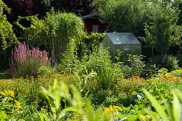 Natural Garden With Greenhouse And Garden Shed