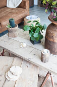 Chinese money plant on rustic coffee table in living room