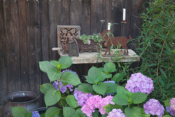 Hydrangea in front of stone table and vintage objets