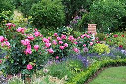 Bed with rose trunks 'Leonardo da Vinci', lavender and book border