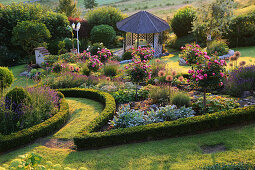 Flower bed with Buxus bourders and rose stem