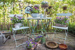 Group siiting place with horned violets and pansies in different vessels