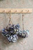 Dried blue hydrangeas hung from coat pegs