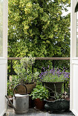 Potted plants on balcony with ornate balustrade