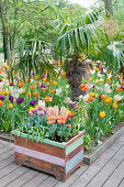 Tulip garden and raised bed made from reclaimed wood in foreground