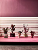 Houseplants on pedestal in front of dark red wall with partly light cladding