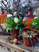 Rustic Easter arrangement with daisy and Easter eggs