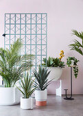 Various houseplants in front of a pastel wall