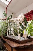 Mounted animal skeleton decorating table in white interior