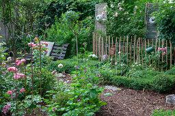 Box tree garden with roses and an antique garden bench