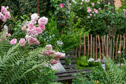Rose and fern in combination