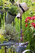 Herbs in planters in garden