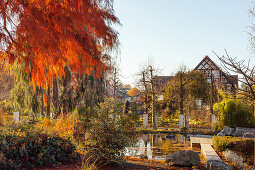 Autumnal garden with pond in morning sun (district teaching garden, Steinfurt, Germany)