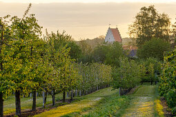Orchards (district teaching garden, Steinfurt, Germany)