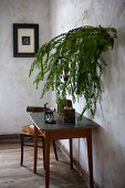 Larch branches decorated for Christmas above vintage table