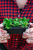 Woman wearing gardening gloves holding seed tray of lamb's lettuce seedlings