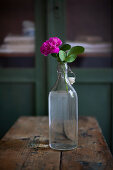 Pink rose in swing-top bottle on wooden table
