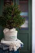 Small Christmas tree in fabric-wrapped pot