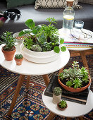 Succulents planted in bowls on side tables