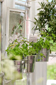 Parsley planted in handmade hanging baskets made from wire coat hanger and metal buckets