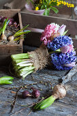 Bunch of blue hyacinths and tulips with burlap ribbon