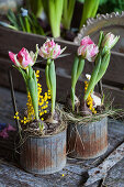 Tulips and mimose flowers in rusty bottle carrier