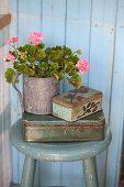 Pink-flowering geranium in metal pot on top of tin