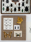 Insect box and butterfly motifs on a canvas as wall decoration