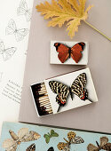 Matchboxes glued with butterfly motifs