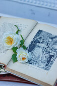 Rosenblüten im alten Buch