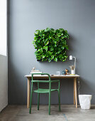 Devil's ivy in square green wall planter above desk