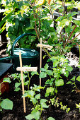 Plants in the mini garden with clothespins as labels
