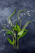 Gooseneck loosestrife flowers (Lysimachia clethroides) on dark surface