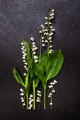 Lily-of-the-valley on dark surface
