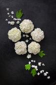 Schneeball-Blüten als Legebild auf dunklem Untergrund