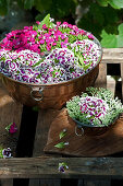 Sweet William flowers in cake tins