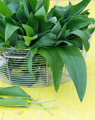 Basket with freshly harvested wild garlic