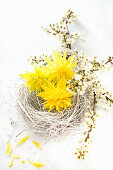 Easter nest with flowers of narcissus 'Rip van Winkle'