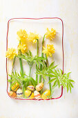 Narcissus flowers and old wooden Easter eggs in stylised frame of decorative wire