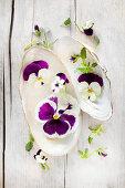Violas and pansies in seashells