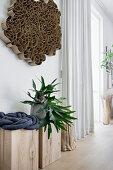Staghorn fern on wooden blocks below cardboard artwork on wall