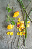 Rose flowers, petals and grass as ingredients for wreath